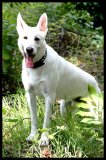 Photo de sanctuary-of-white-wolf