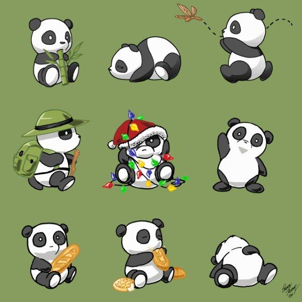 pour my panda (chaton)