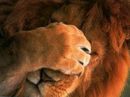 :(Certaines Lionnes peuvent être plus Dangereuses que les Lions !:o