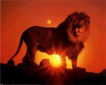 ~ BLOG DE ☼ LionSun73 ☼ ~ (Pour Rugir de Plaisir !)