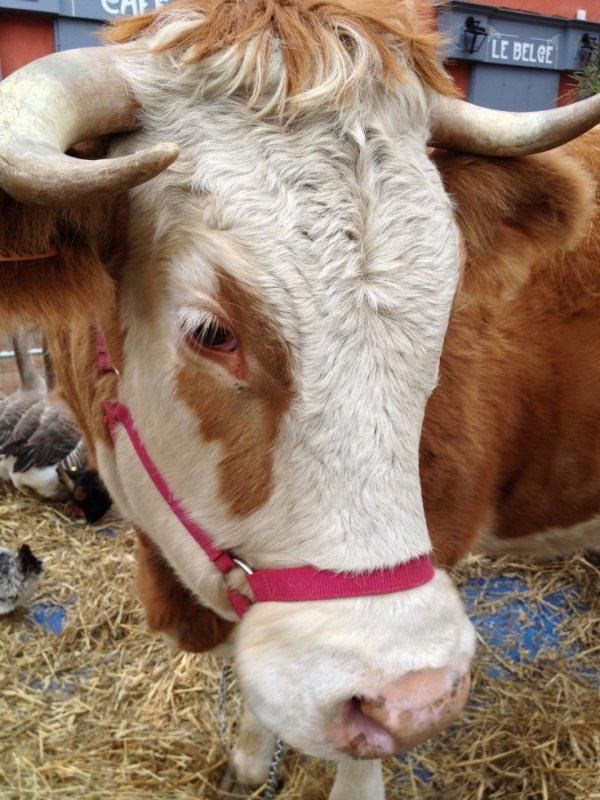 une vache !!!!!!!!!!!!!!!!!!