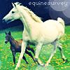 equinesurvey