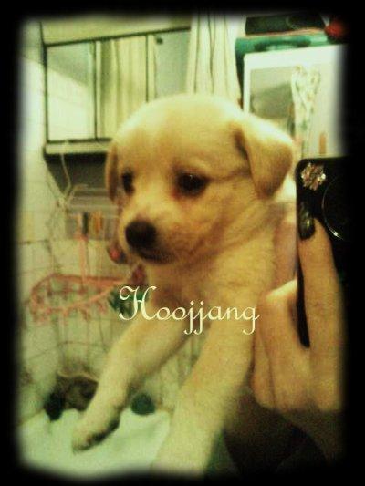 [ 7 ] My baby dog <3