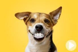 j adore sonn  sourire