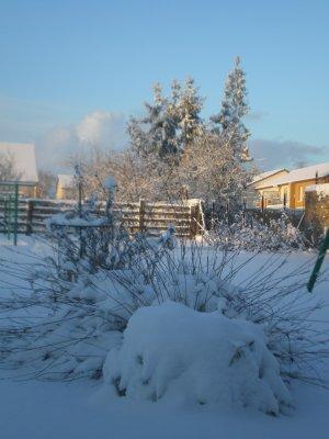Mon petit jardin sous la neige :)