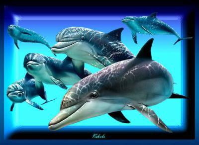 (l)(l)dauphins(l)(l)