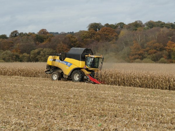 maïs grain 2010^