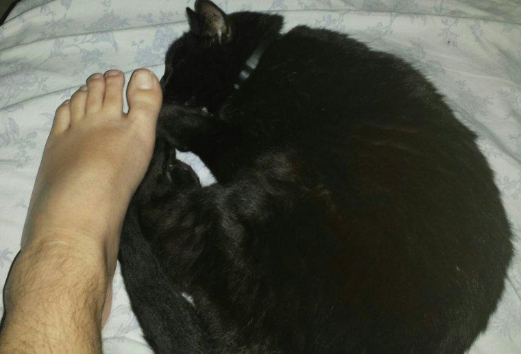 Mon chat est à mes pieds :-)