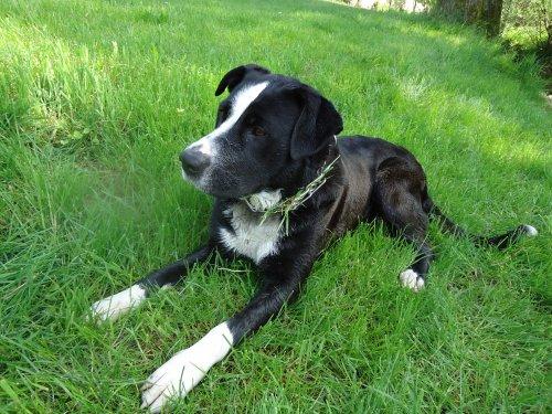 Description 2 : D'un chien pas commun , Niiky <<3