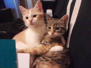 Chamalow et Kira