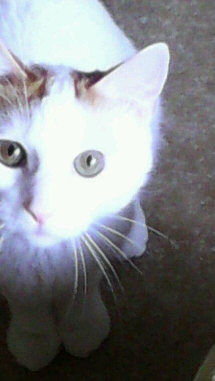 Mon petit tom