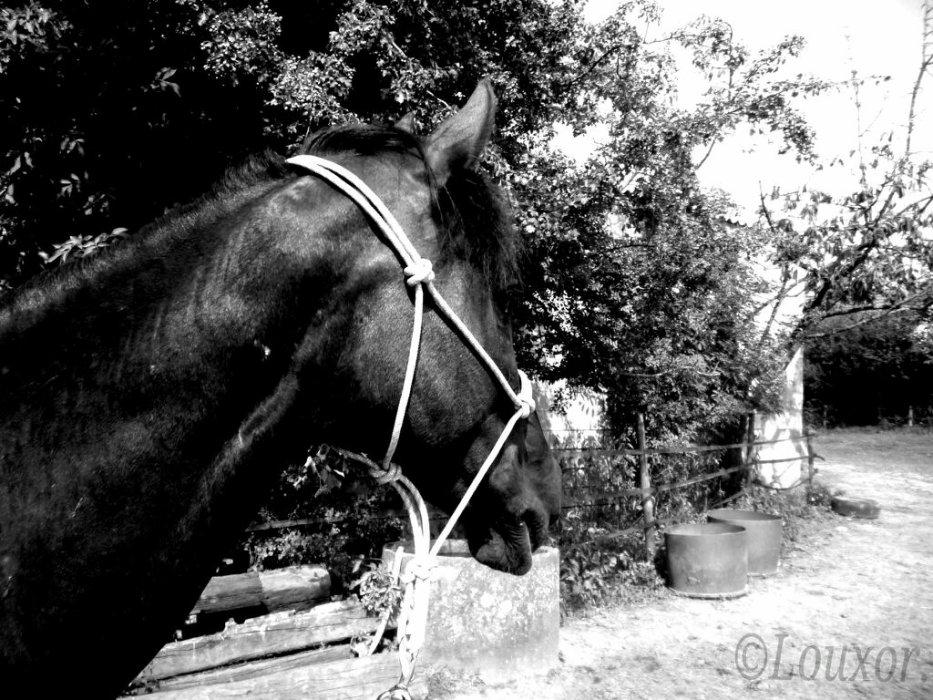 Louxor un cheval :)