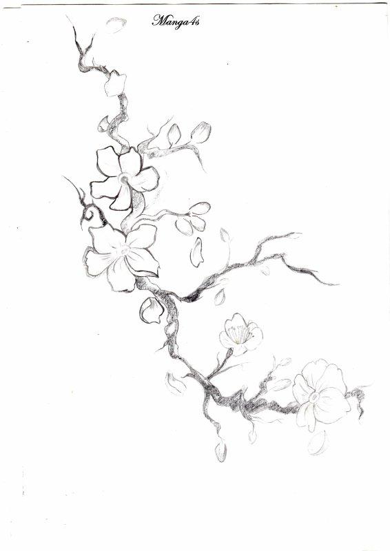 Branche de cerisier japonais (pour le tattoo de la mère d'un pote)