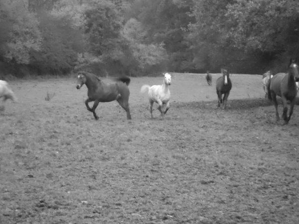 descente des chevaux d'Isnel ! =)