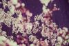 Fruition [Finest Ego Faces 12 Series Vol. 5] - Hanami