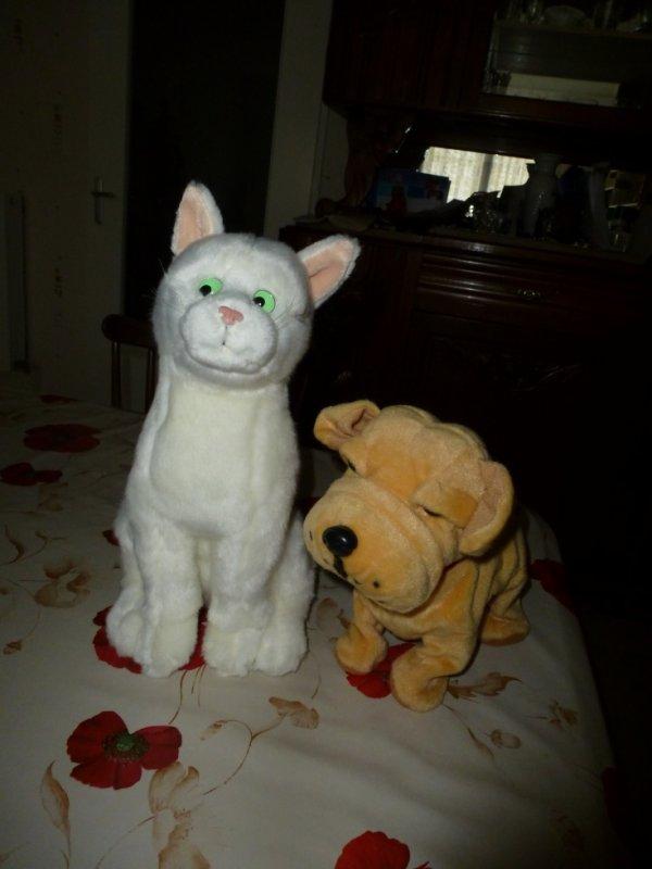 mon chat feu vert le chien qui aboie