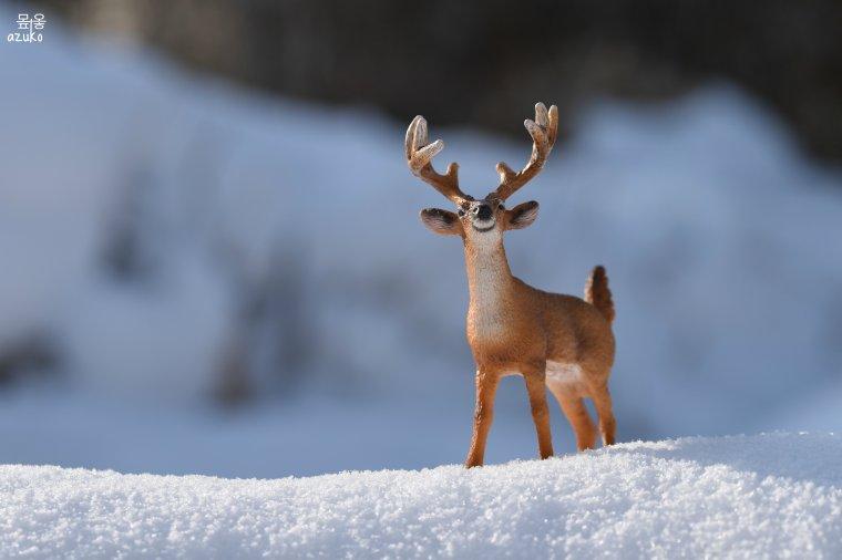 흰 눈 • huin nun • neige blanche