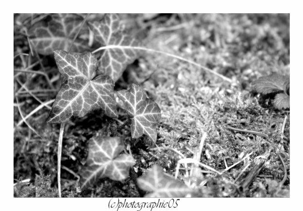 Noir et Blanc + fleurs