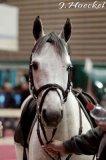 Photo de Peax-chevaux-Celebre