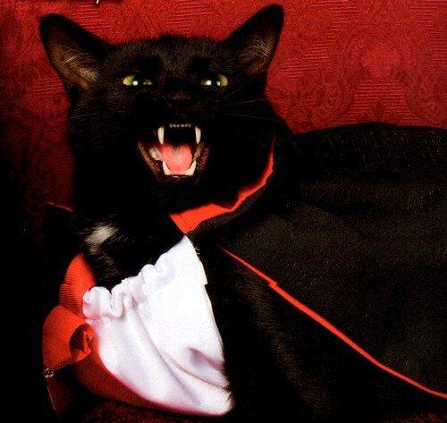 la Légende du chat-vampire