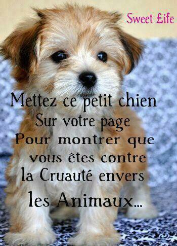 contre la maltraitance des animaux !