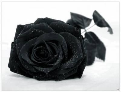 La Rose Noire Présentation des personnages