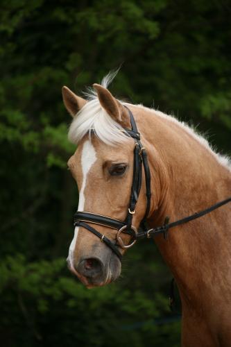 Pourquoi ce cheval