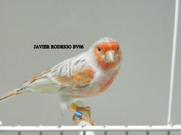 MACHO  AGATA PASTEL ROJO MOSAICO Nº 84/11