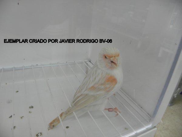 HEMBRA SATINE ROJO MOSAICO 133-2012 60¤