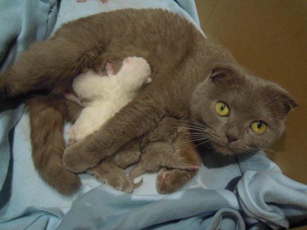 4 magnifiques chatons sont nés cette apres midi