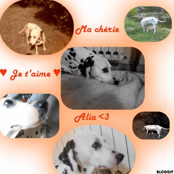 Mes animaux que j'aime (je sais sa a rien a voir avec les schleich)