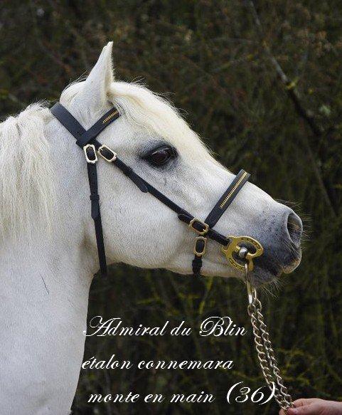 Admiral du Blin étalon connemara