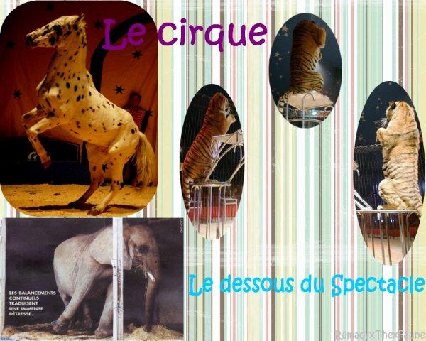→ art n°2 : Le Cirque