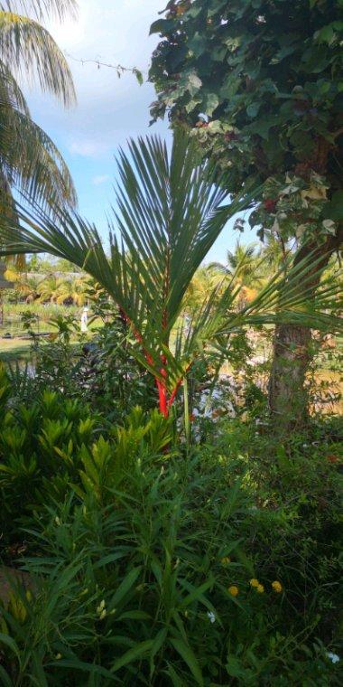 Végétation 1