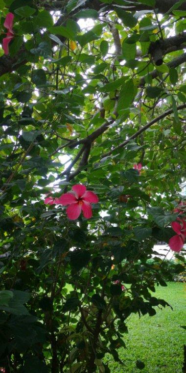 Végétation 3