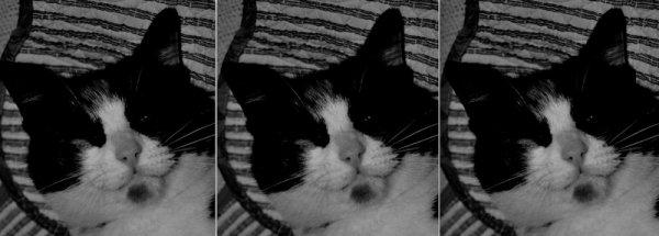 """Il suffit de croiser son regard avec celui d'un chat pour mesurer la profondeur des énigmes que chaque paillette de ses yeux pose aux braves humains que nous sommes """"...Nougatine, mon amour de chat ."""
