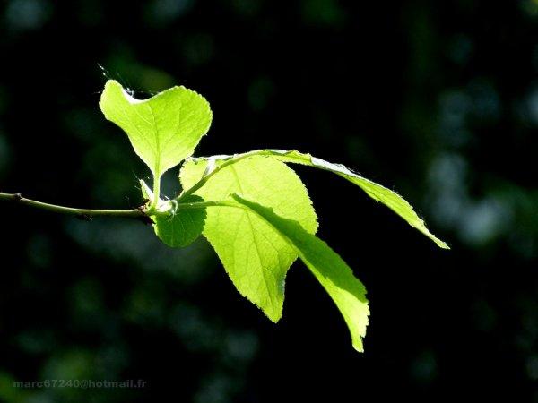 hêtre vivant et nature en vie