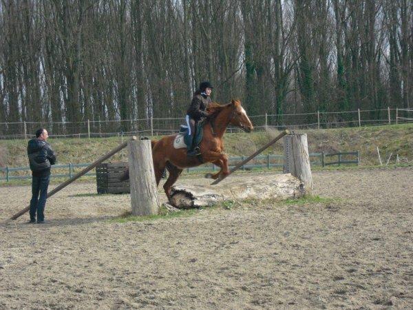 centre equestre willems