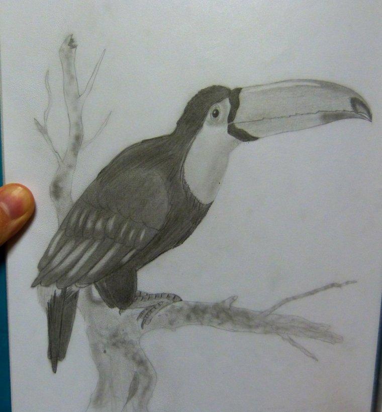 Mes dessins d'oiseaux