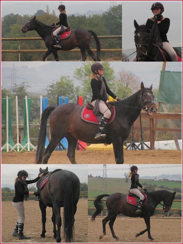 - Le cheval est le meilleur des médicament pour se sentir bien, mais attention, si on en prend trop, on pourrait finir par en être drogué - Moi j'en ai pris trop, et je pense que je serais drogué pour le restant de mes jours mais je m'en fou, j'aime. ♥
