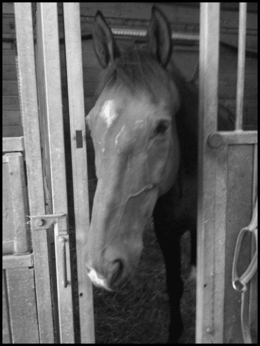 Horsey ♥