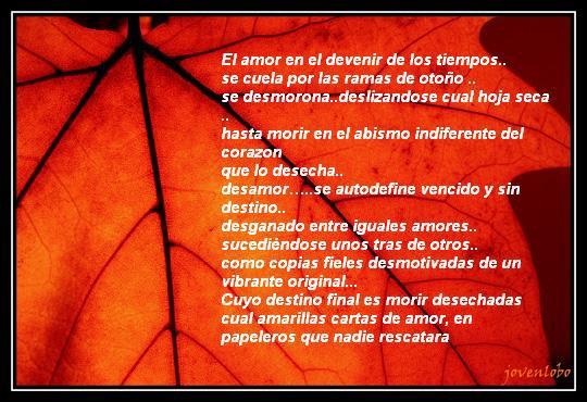 EL AMOR......♥