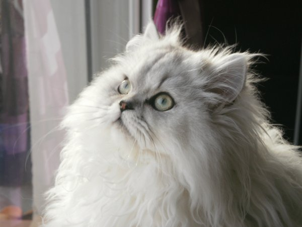 Eiko, the bombe cats =')