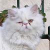 chaton-magique
