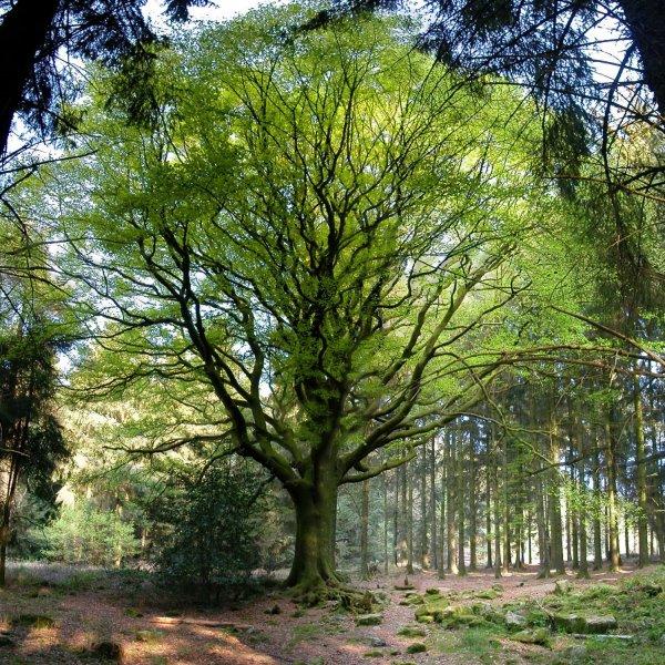 ....L'arbre....