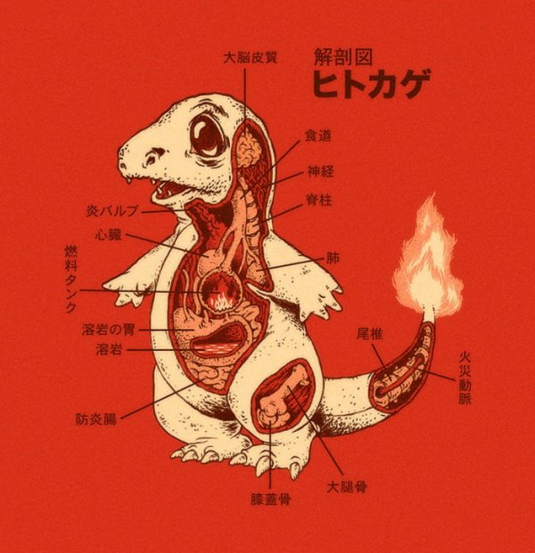 Anatomie de ④ Pokémons