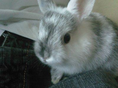 flocon mon lapin de 6 mois ^^