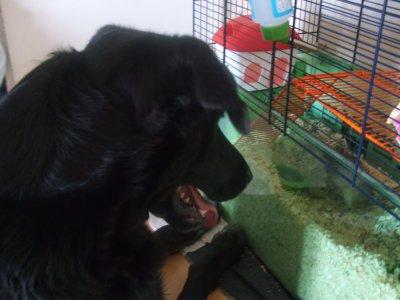 baboss mon chien ^^