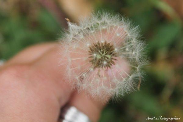""""""" La nature fait toujours, selon les conditions dont elle dispose et autant que possible les choses les plus belles et les meilleures """" Aristote"""