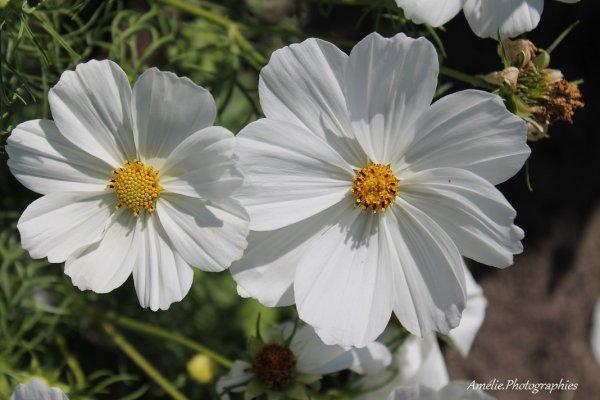 """"""" Jamais la nature ne nous trompe, c'est toujours nous qui nous trompons """" Jean Jacques Rousseau"""
